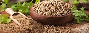 Coriander Seed Iran
